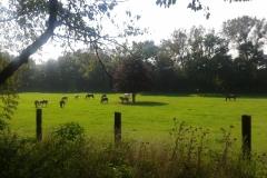 Weidezeit in Wennerode