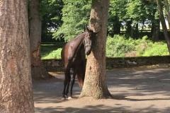 Pferd sein